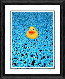 The Great British Duck Race Framed Photographic Print